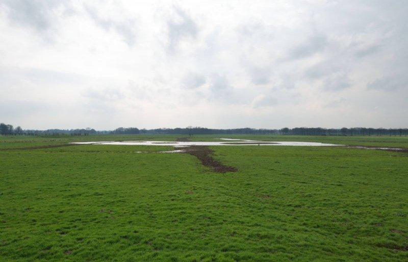 Ottershagen is een natte kern, belangrijk voor weidevogels.