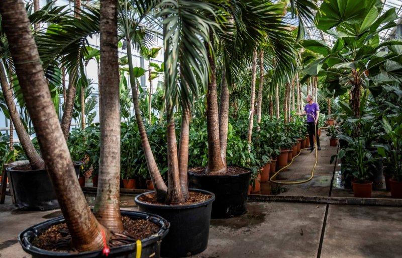 Fachjan heeft bomen tot 14 meter in het assortiment.