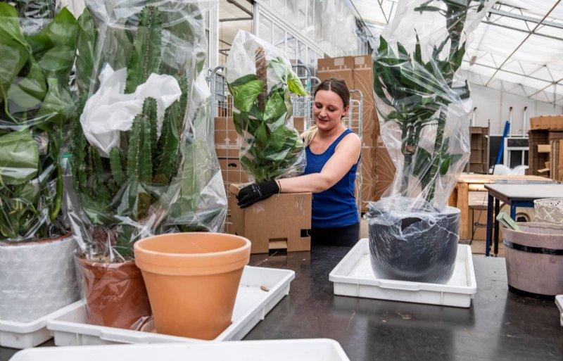 Bij Plantsome kunnen consumenten ook accessoires als potten, plantentafels en plantenvoeding bestellen.