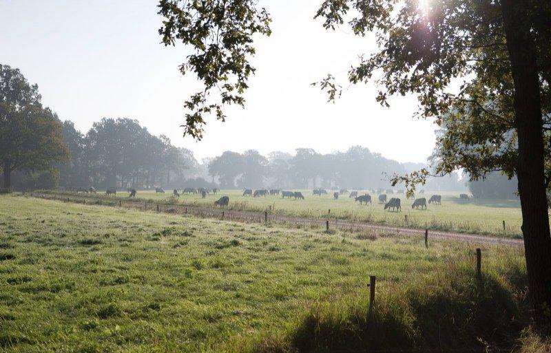 Het Springendal bij Ootmarsum.