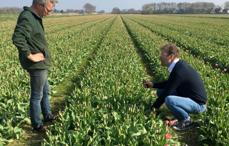 Teler John Huiberts (links) en Wouter Vos van Veld Tulpenwodka tussen de Red-Impression-tulpen.