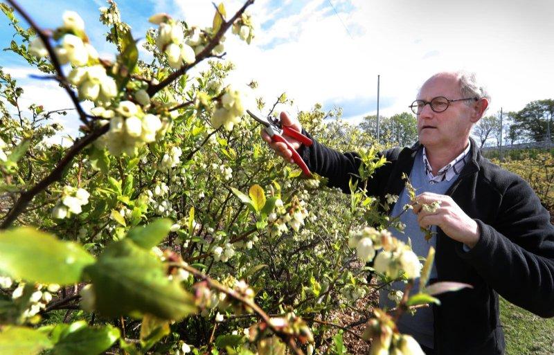 Verzorging van de fruitbomen vergt veel tijd.