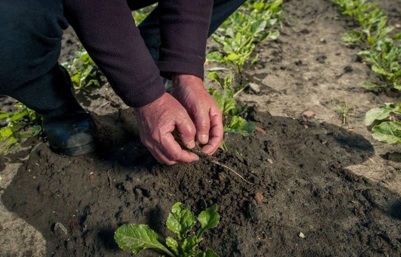 In een gezonde bodem is minder kans op uit- en afspoeling.