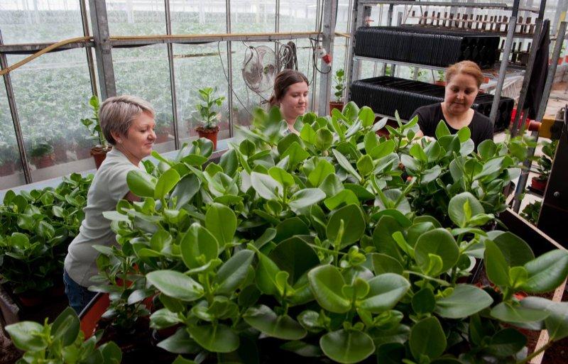 Bij de teelt van planten werkt VDE Plant samen met Koppert Biological Systems en leren de bedrijven van elkaar.