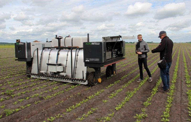 Bestrijden van aardappelopslag in bieten met de autonome Robotti gaat nog niet goed: maar 66 procent wordt bestreden.