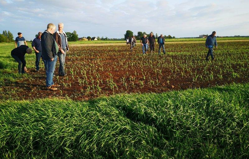 Boeren bekeken ook de proef met strokenteelt mais.