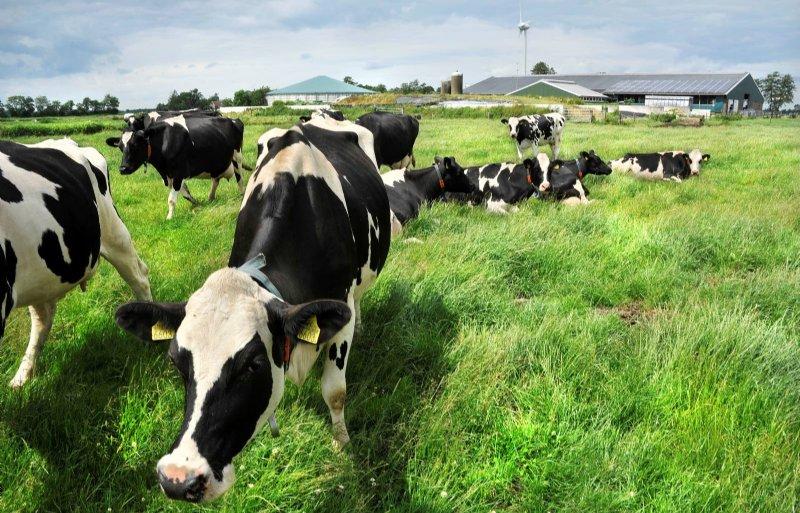 Het gebied bij Nijeveen wordt deels een energielandschap.