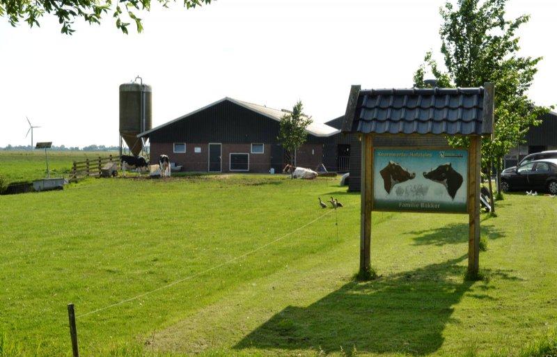 Koarnwerter Holsteins met voor de stal een uitloop.