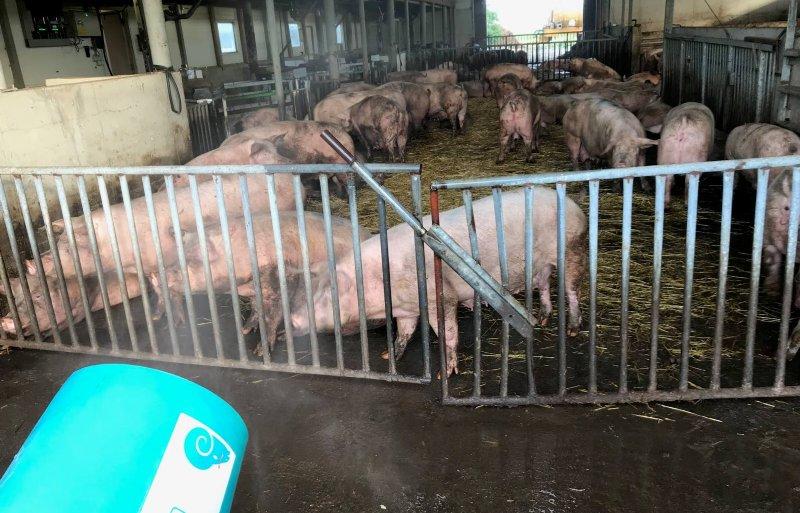 Nevelinstallatie bij vleeskuikenhouder Erik van Veldhuisen in Renswoude