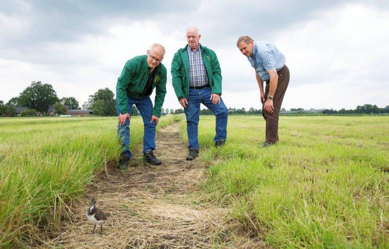 Steeds meer boeren zijn bereid om mee te doen aan weidevogelbeheer.