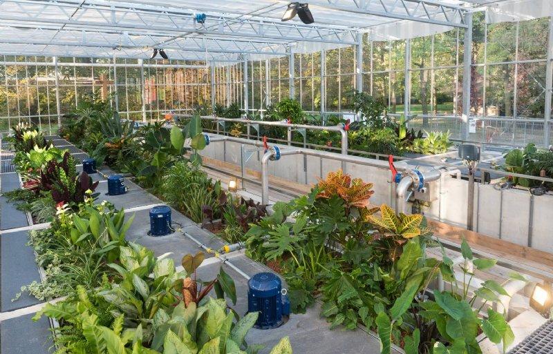 In de waterzuivering staan spathiphyllums, anthuriums, dieffenbachia's, crotons, ficussen en palmen.