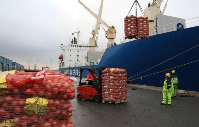 Nederland is en blijft een van de belangrijkste exportlanden voor uien.