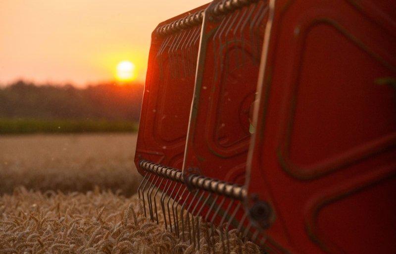 Opbrengsten van tarwe liggen tussen 8 en 10 ton.