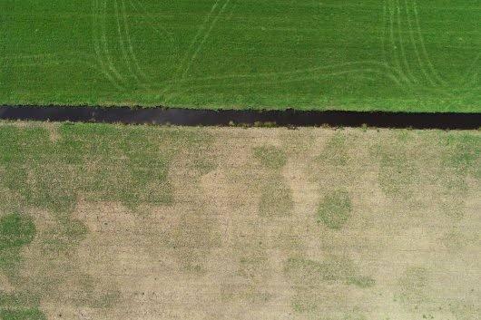 Dronebeeld van een graslandperceel met en zonder muizenschade. Het bovenste perceel is onder water gezet ter bestrijding van de muizen, het onderste perceel niet. Het beeld laat ook de vlekkerige structuur van de muizenschade zien.