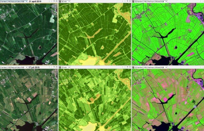 Ontwikkeling muizenschade en droogte bij Tersoal. Bovenste beelden zijn van 21 april, onderste van 17 juli.  Foto: Altenburg en Wymenga