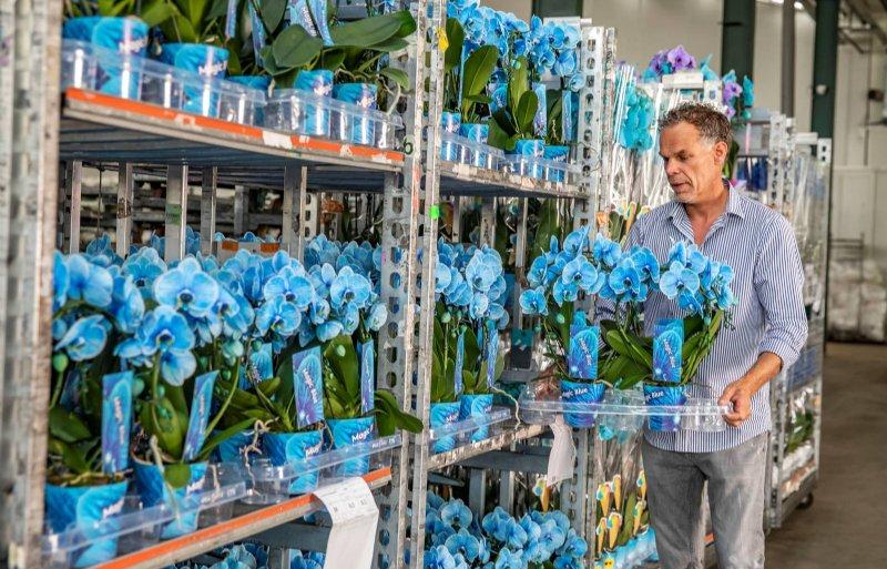 Orchideeën hebben bijpassende potten en etiketten.