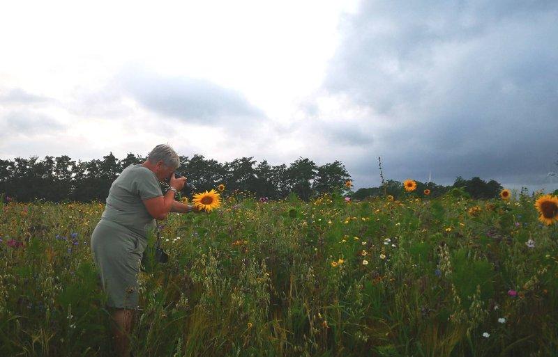 Burgers fotograferen zonnebloemen op het land van Klaas Osinga in Marrum.