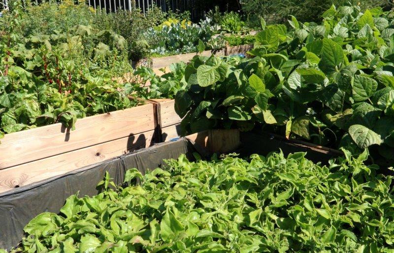 Diverse groenten kunnen tegen zilte omstandigheden.