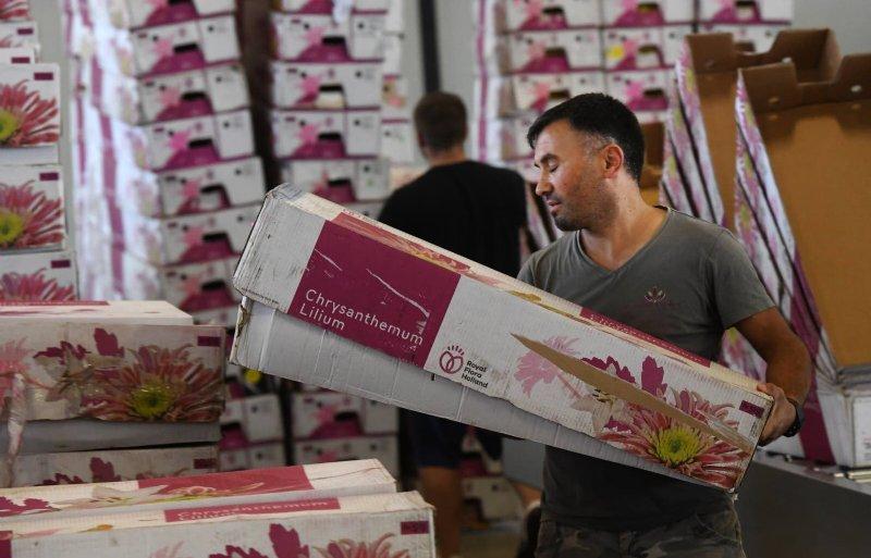 Bloemen komen als Kreling Chrysant op de markt.