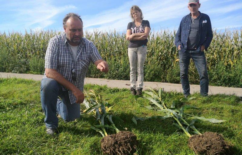 Maisdeskundige Michel Raaphorst laat de verschillen zien.