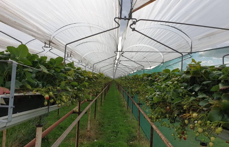 Op Bergerden zijn zowel groente- als fruittelers actief.