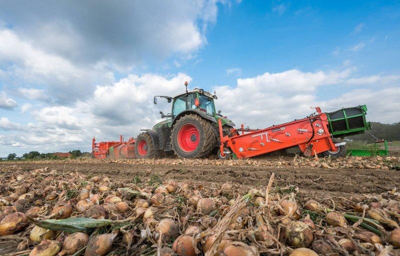 De uienproductie ligt hooguit op gemiddeld 50 ton per hectare.