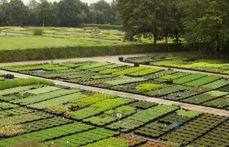 Heutinck vermeerdert een groot deel van zijn planten.