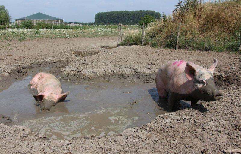 Zeugen in de modderpoel.