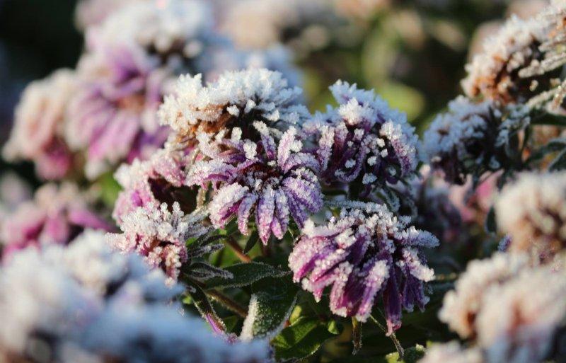 'Perennial' staat voor 'eeuwigdurend' en vaste planten zijn dan ook grotendeels winterhard.