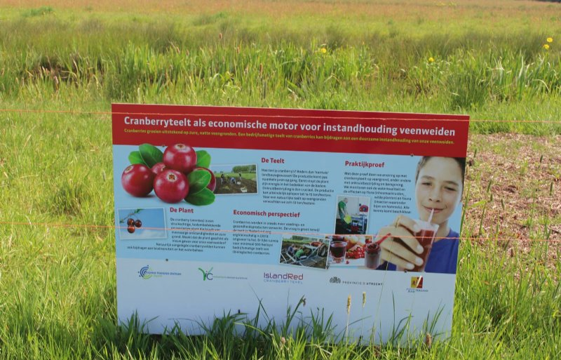 Cranberryteelt als nieuw verdienmodel is nog geen vruchtbaar concept.