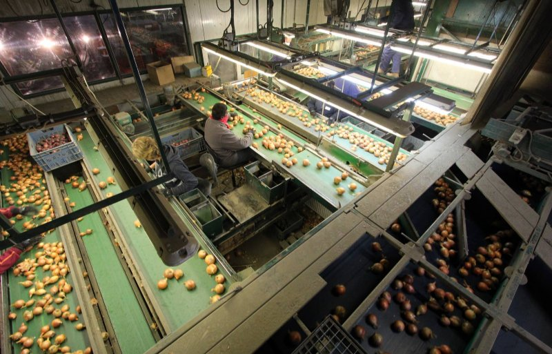 Vanuit Nederland zullen steeds meer uien die elders zijn geteeld, worden verhandeld.