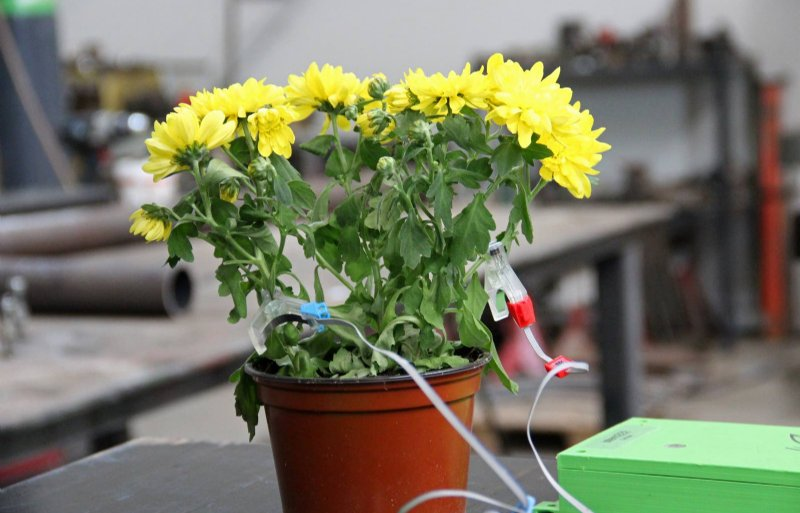 Sensoren van 2Grow kunnen meten of een plant gezond is en hoe deze reageert op de omgeving.