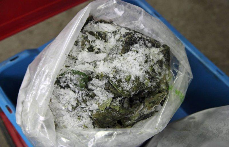 De algenpasta gaat ingevroren naar Eco Protecta.