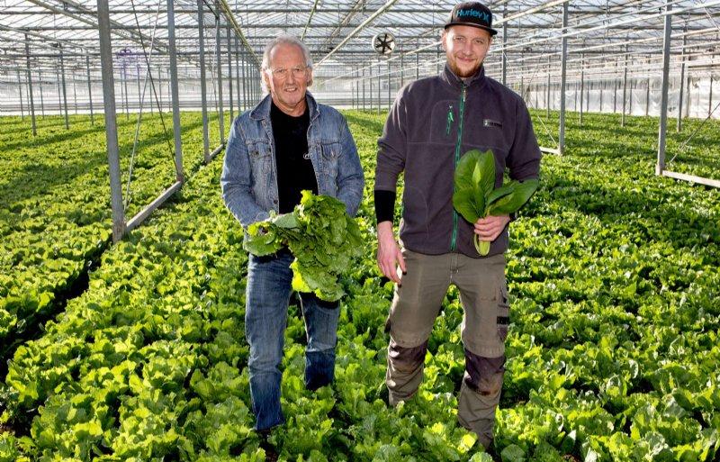 Niek Kooijman (links) met andijvie en Gert Kooijman met paksoi: 'Het is soms wel alle hens aan dek.'