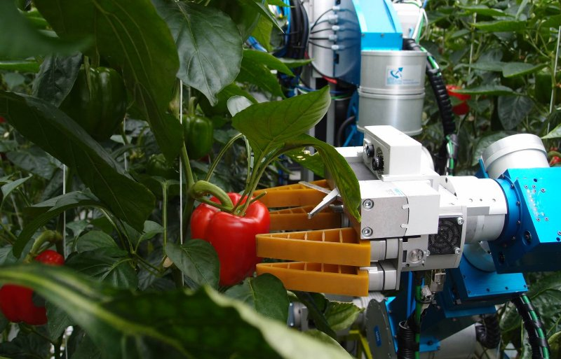 Robots krijgen meer en meer invloed op arbeid in productie, logistiek, hrm en teelttechniek.