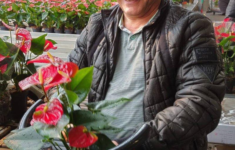 Koerdische statushouder pakt anthurium in bij Karma Plants in Bemmel.