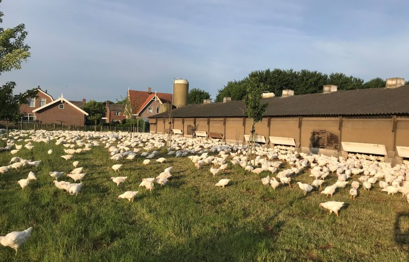 Pascal Groot heeft 9.600 biologische vleeskuikens.