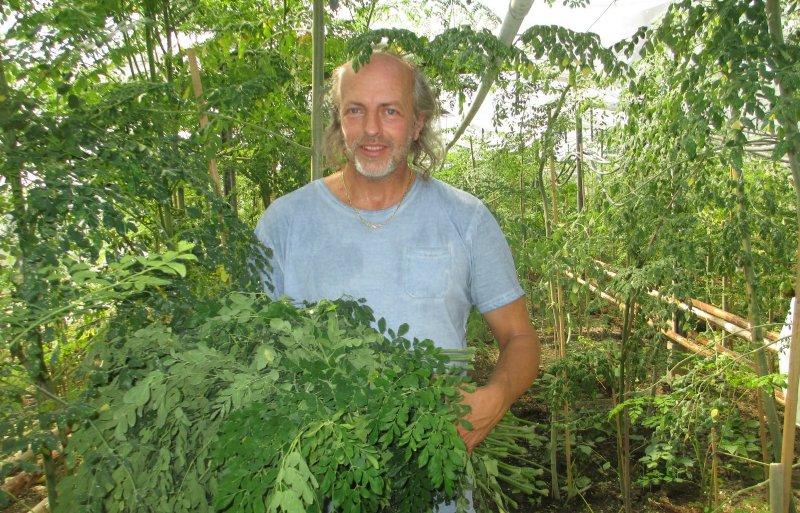 Jouke van den Berg met een bos moringablad.