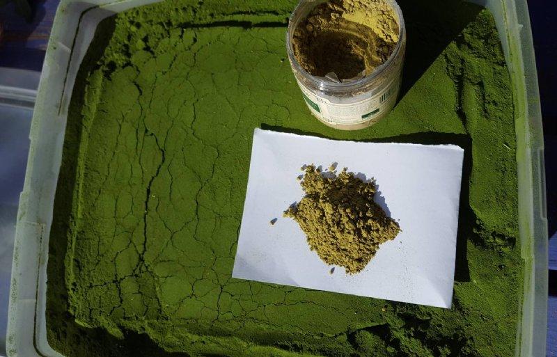 Moringapoeder is als voedingssupplement te koop.
