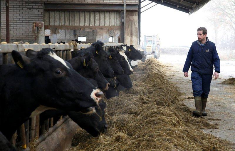 De voorjaarskalvende Fries-Hollandse koeien produceren 6.500 kilo melk per jaar.