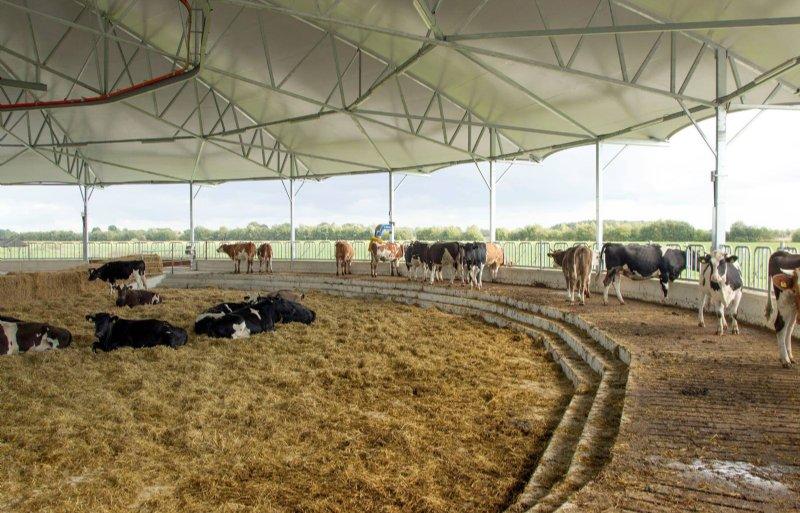 Biologische rundermest is lastiger te krijgen omdat de melkveehouderij deze zelf nodig heeft.