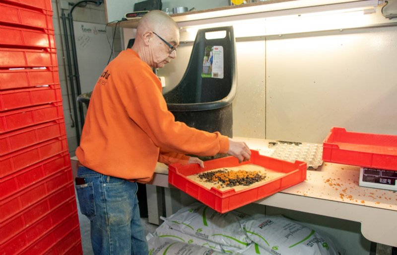 De meelkevers van Wadudu lusten behalve meel ook graag wortel.