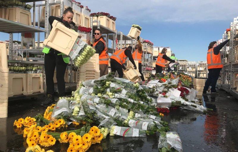 Het actuele beeld bij de bloemenveiling in Aalsmeer op maandag 16 maart. Massale doordraai als gevolg van de coronacrisis.