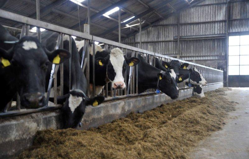 De melkveehouderij van Klaas Hoogendoorn.