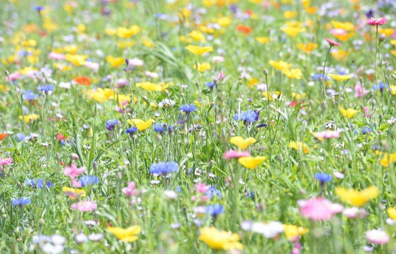 Hooibouw is goed voor de biodiversiteit.