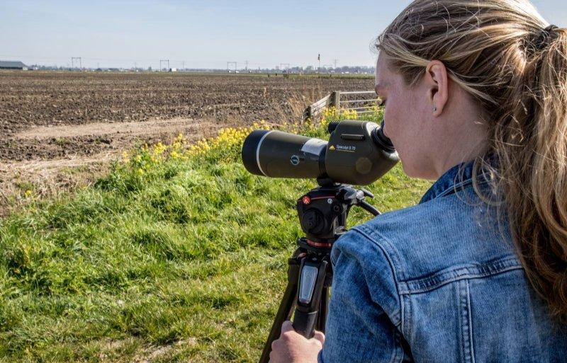 Tessa Hoogeveen checkt eerst of de kievit nog op het nest zit.