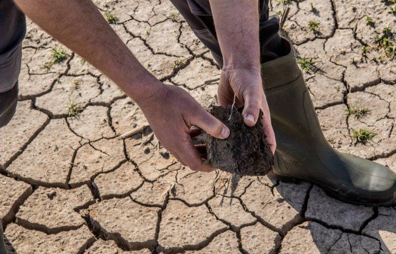 Dekker bemonstert het bodemleven in een kluit grond.