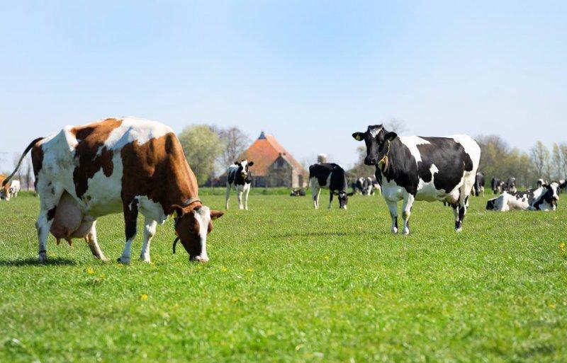 De 175 melkkoeien gingen op 27 maart naar buiten.