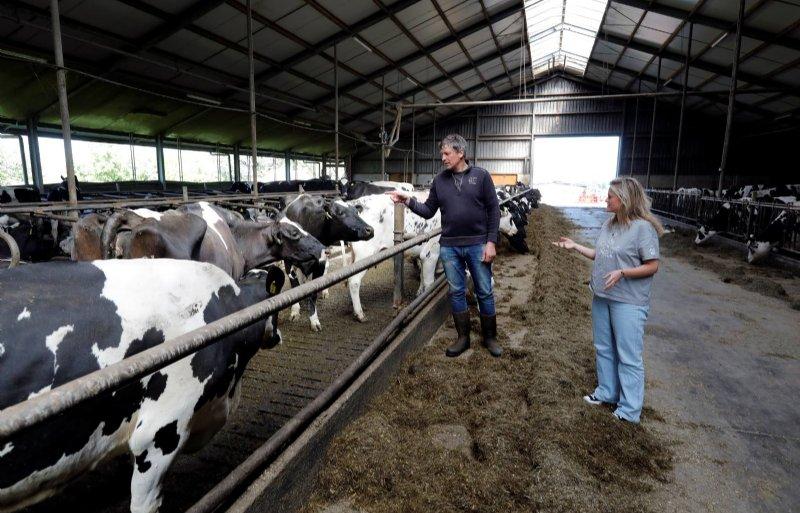 Ad Brandwijk houdt 120 koeien.