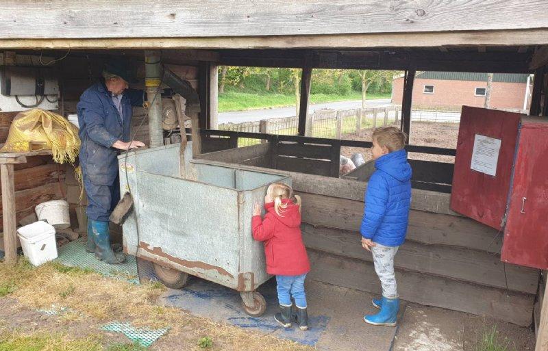 Kinderen kijken toe hoe de buitenvarkens voer krijgen.